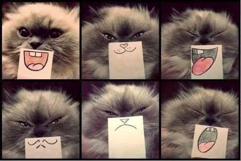 cat grins