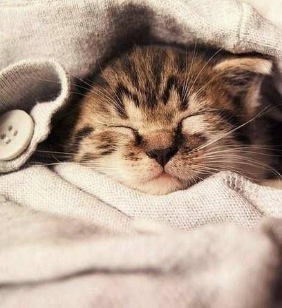 kitten in jumper
