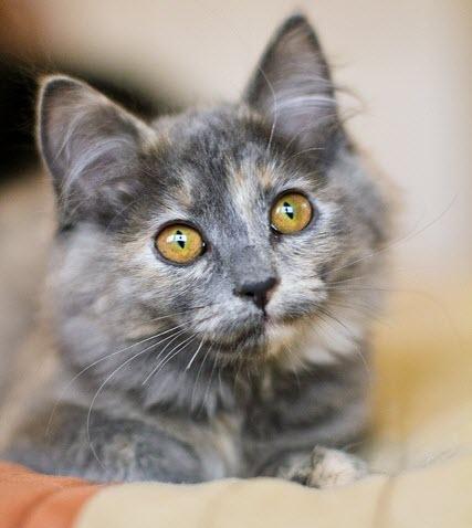 pretty eyes grey