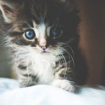 eyes kitten cute