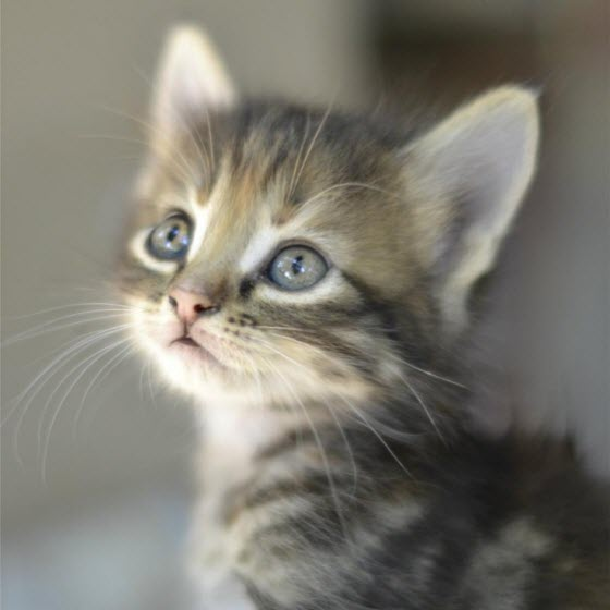 kitten looking left