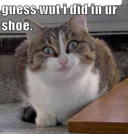 shoe present