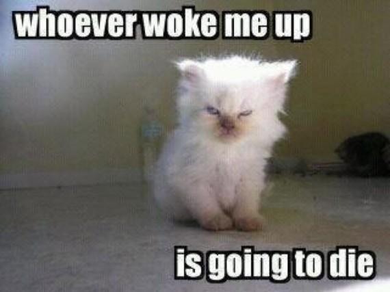 woke me up