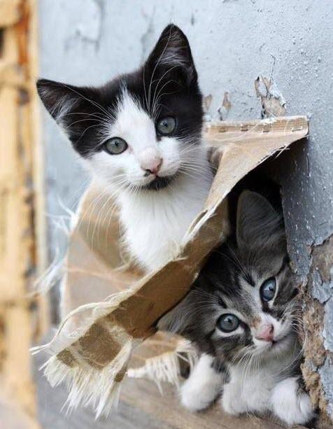 2 kittens 1