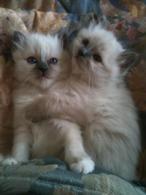 2 kitties