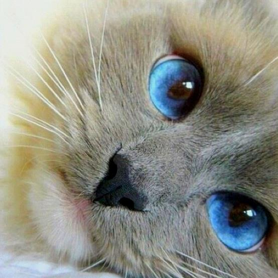 Those are amazing eyes - what a kitty!