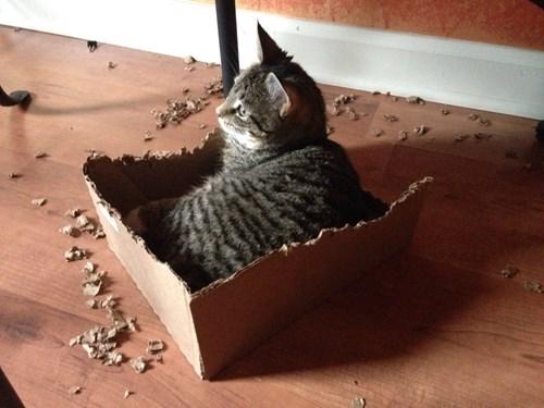 cat eaten box