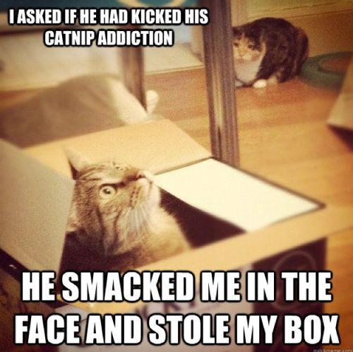 catnip LOL