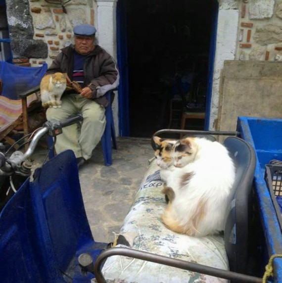 cats in greece