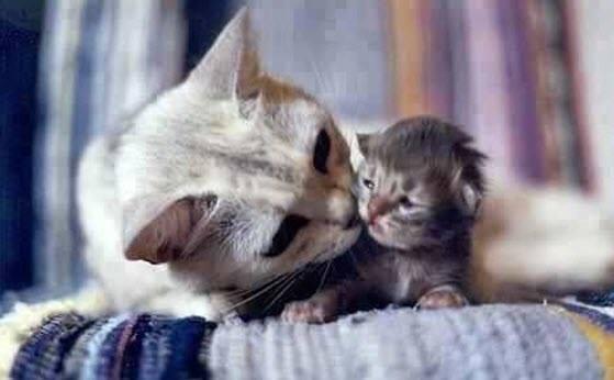 mama and kitten