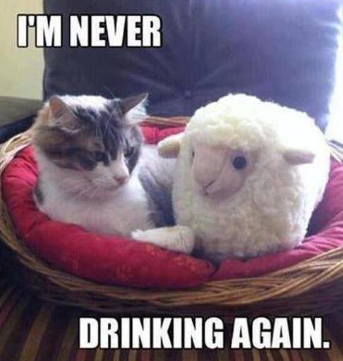 never drinking