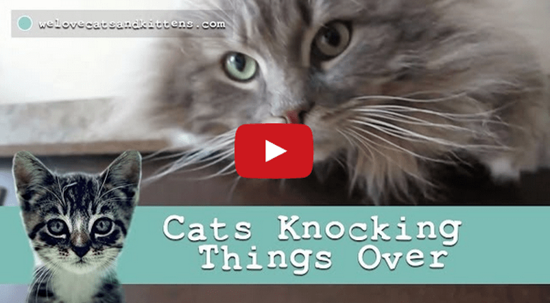 We Love Cats Knocking Things Over A Great Compilation