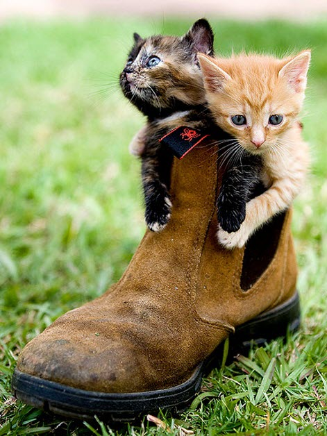 2 puss in boots