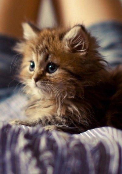 cute fluffy kitty