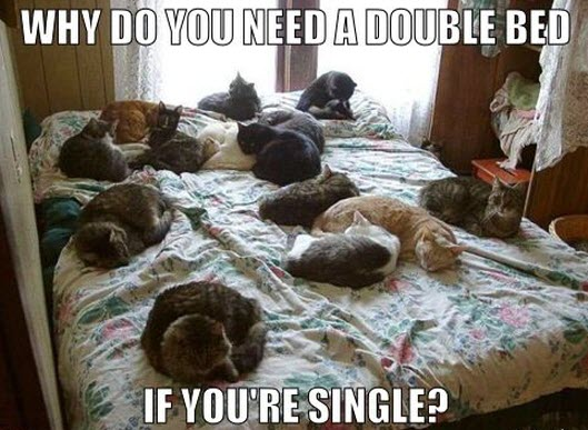 double bed lol