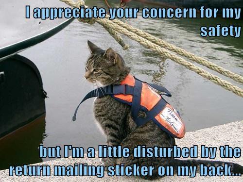 life jacket cat