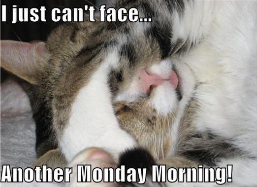 monday morning LOL