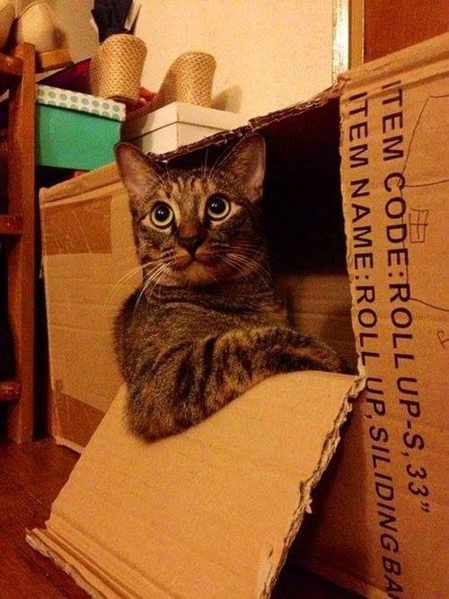 my box 2