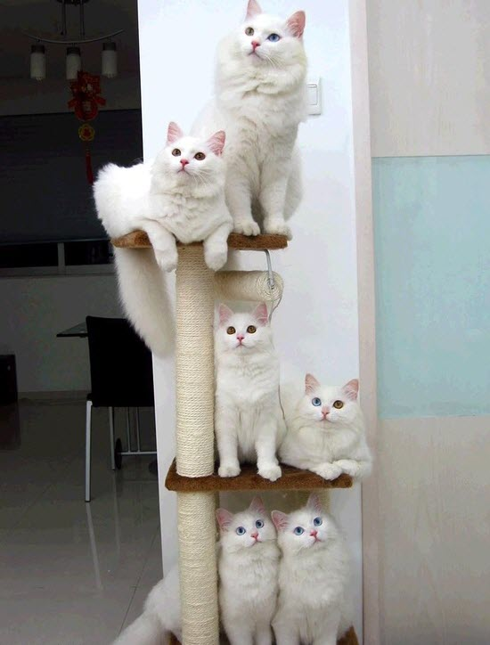 a tower of forest cats