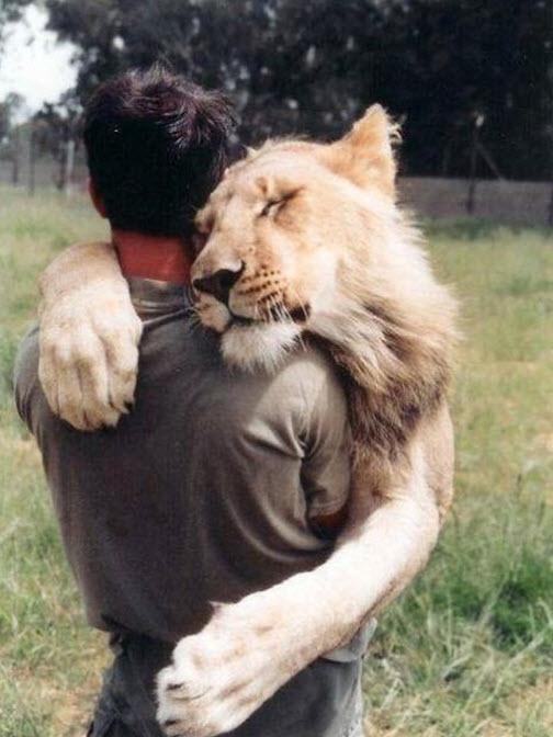 big cat cute 7