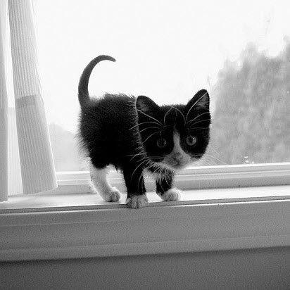 black window sill