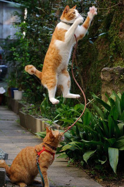 cat flying caption