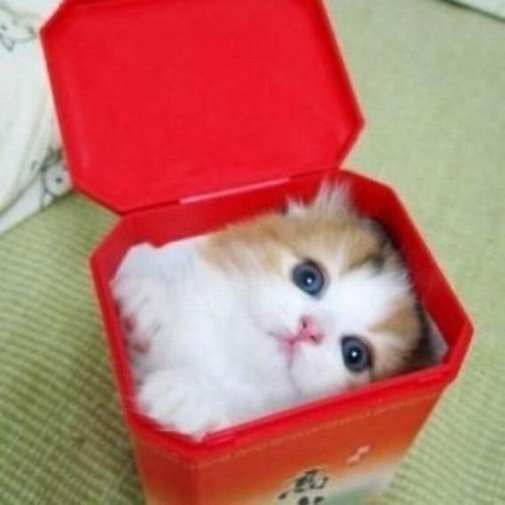 cat in red box
