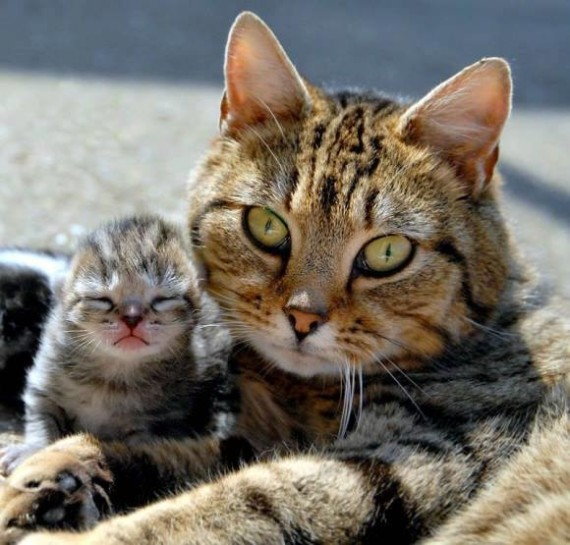 mommy and kitten
