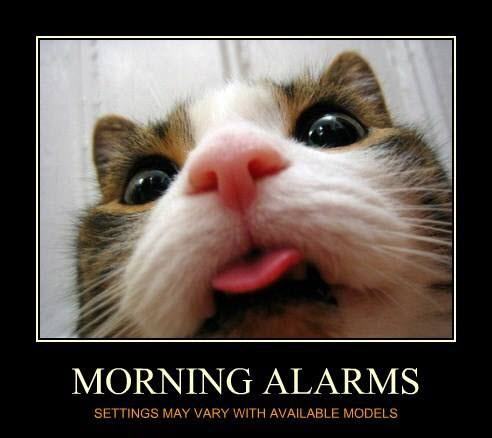morning alarms