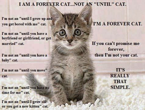 they are all forever cats