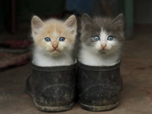 2 in boots