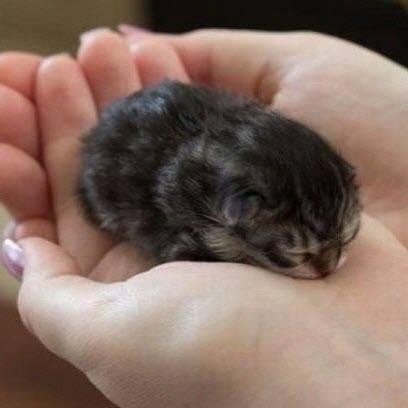 baby kitten in hand