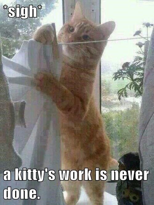 kittys work lol