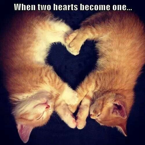 two hearts one