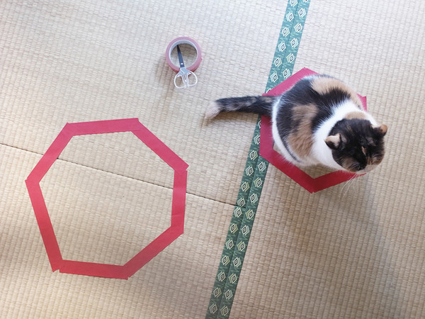 cat sits in smallest circle