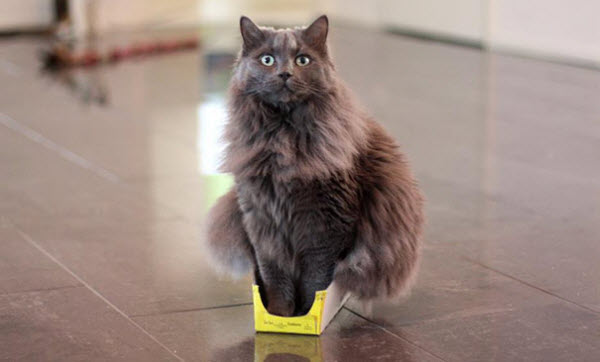 fluffy cat if i fits i sits