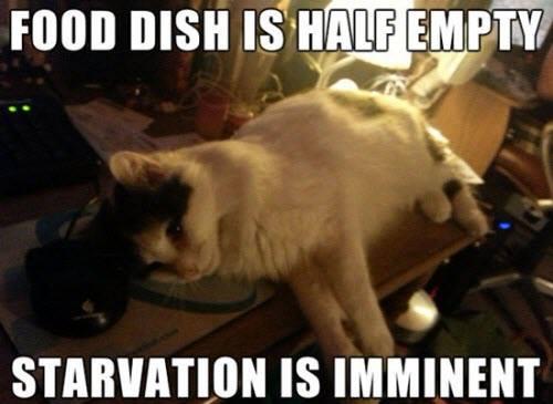 food dish lol 1