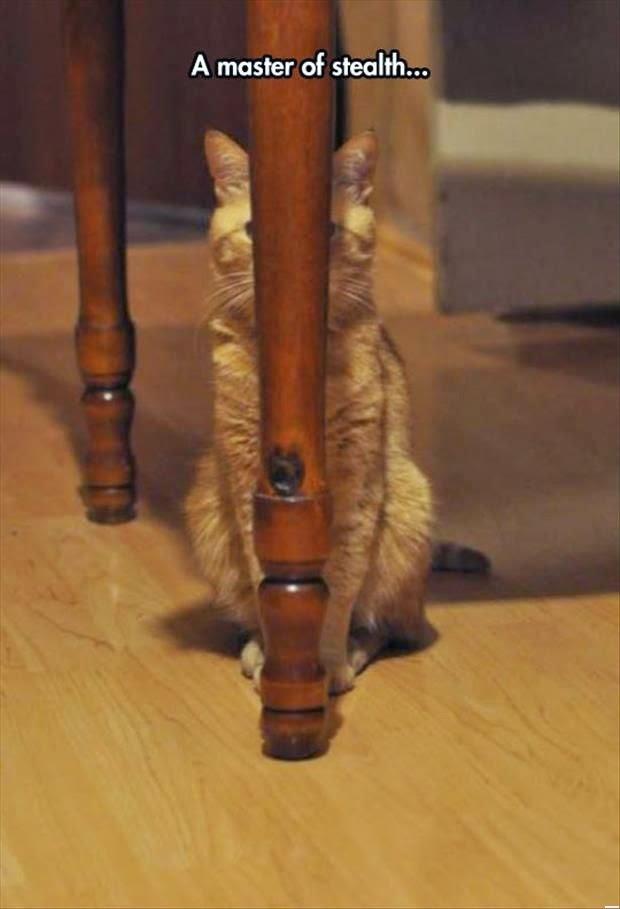 funny-hiding-cat