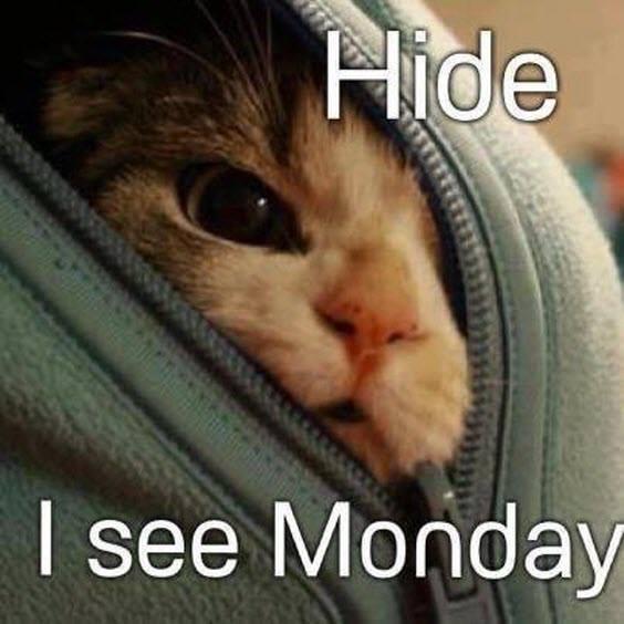 hide monday