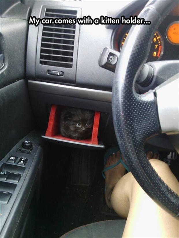 kitten holder