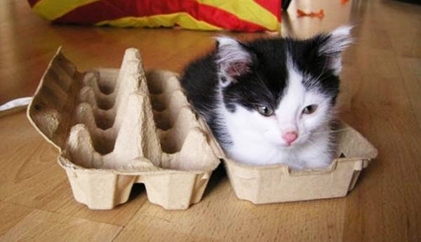 kitten in egg box