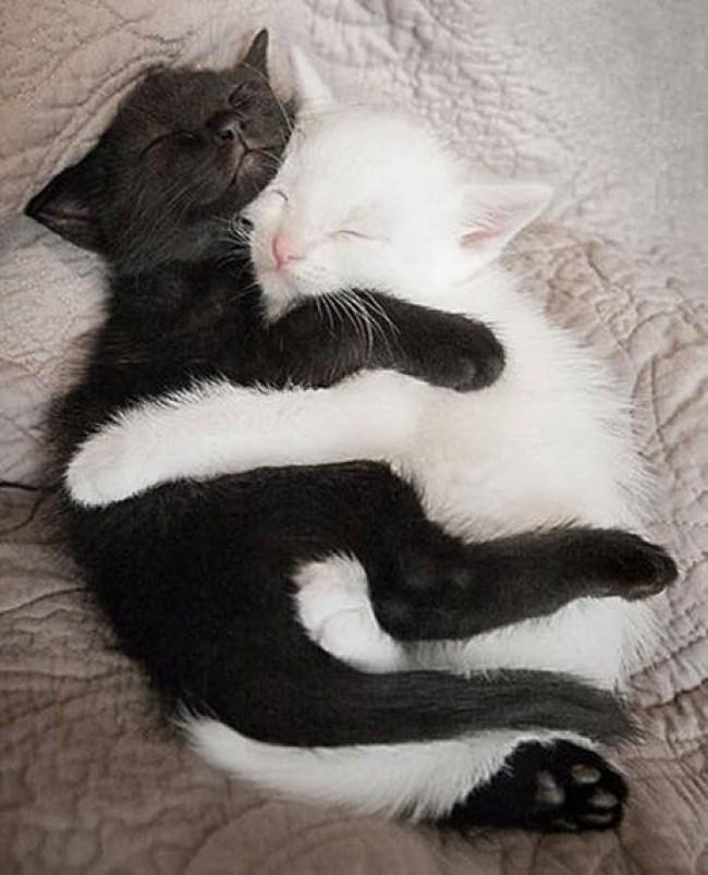 Cuddle 4