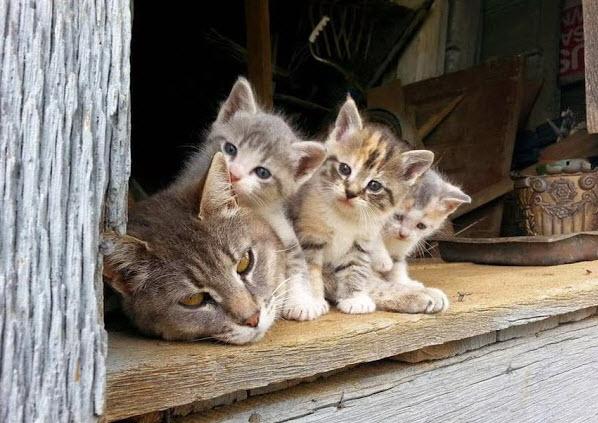 mum and kittens