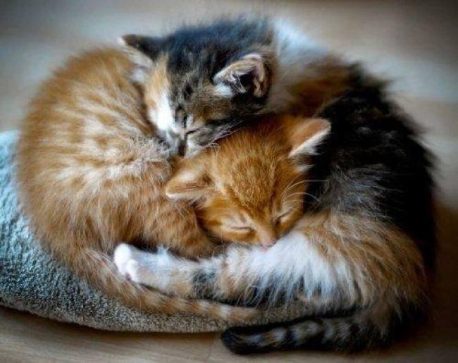 cuddle 9