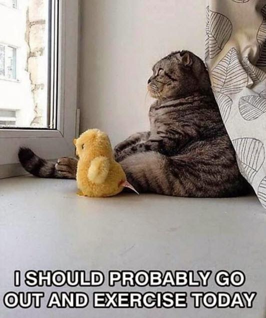exercise-cat