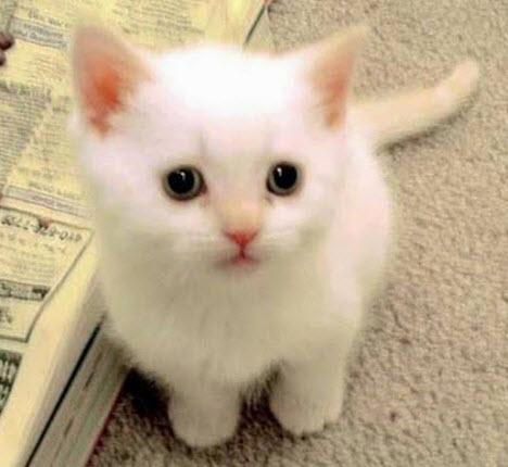 white cutie