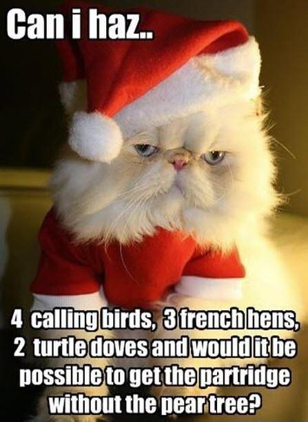 Grumpy xmas cat