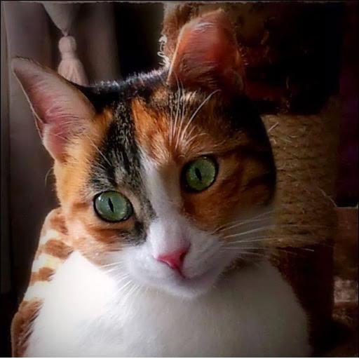 green eyes 1