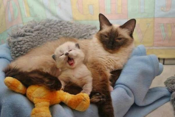 sleepy kitten 2