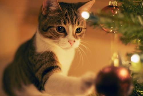 xmas kitty 6